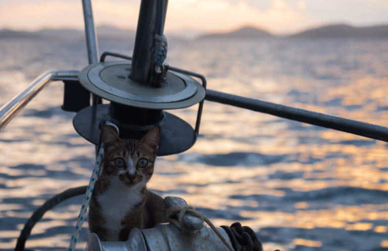 Námořní kočka Pepet