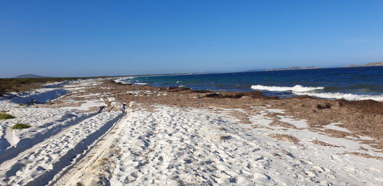 hromady mořských řas na Rossiter Bay
