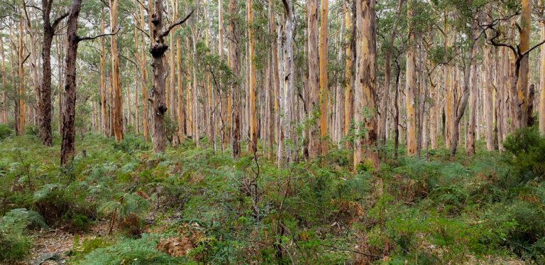 les Západní Austrálie, Margaret River