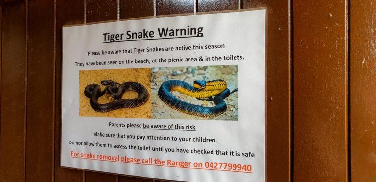 upozornění před hadem Tiger snake