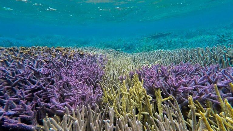 korálová zahrada, Abrolhos