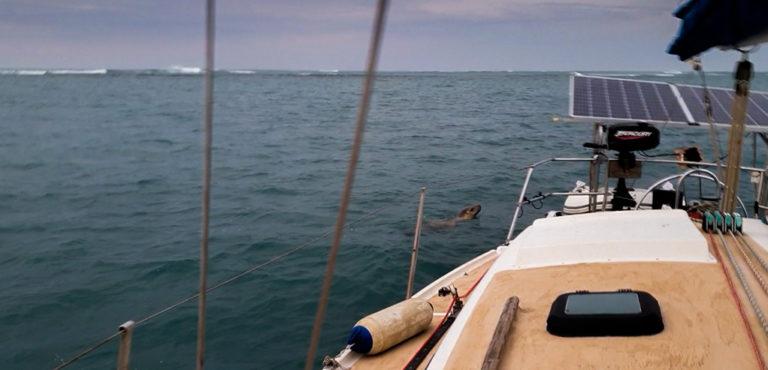 zvědavý tuleň, Green Island, Austrálie